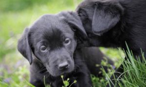 dog training in Blackburn