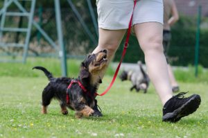 1-1 dog training in clitheroe